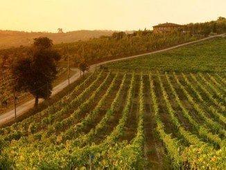 Podrán acogerse a las ayudas los viticultores que previamente hayan solicitado la reconversión