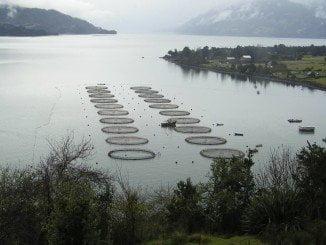 A pesar de todo, el volumen de comercio de  la acuicultura entre países europeos crece