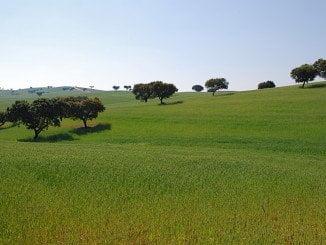 Los socialistas dicen que el campo onubense dejará de percibir 2,1 millones de euros al año