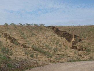 Olivares afectados por la desertificación en Cordoba