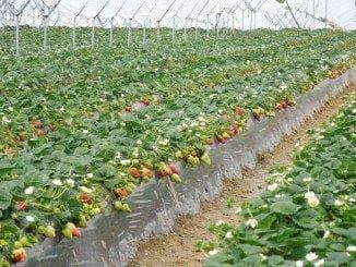 La agricultura, de nuevo objeto de una interesante jornada que se llevará a cabo en Adesva (Lepe)