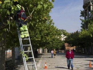 Entre otros puestos, en el Ayuntamiento de Lepe se oferta el de jardinero