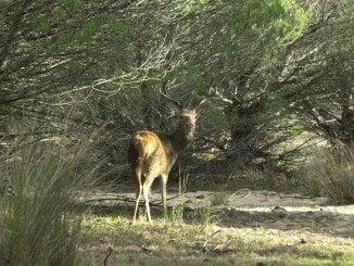 IU dice que la extracción de gas alrededor del Parque Natural de Doñana incumple la normativa