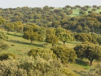 La inclusión de la dehesa y el monte mediterráneo en la denominación de superficies de pasto permanente, una reivindicación de Asaja desde hace años