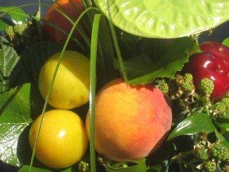 Melocotones, ciruelas y nectarinas, entre los que recibirán ayudas