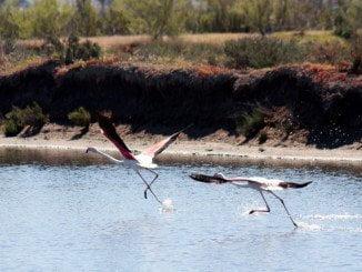 Una de las iniciativas se desarrolla en el Paraje Natural Marismas del Odiel