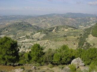 Vista panorámica de unos olivares en Jaén