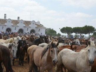La Saca de Yeguas es la gran cita del mundo del caballo en Almonte