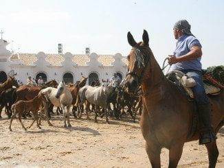 La Saca de las Yeguas lleva celebrándose cinco siglos