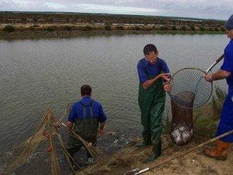 Pescadores en Salinas del Astur