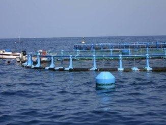 El Consejo de Gobierno ha regulado las ayudas para pesca y actividades acuículas