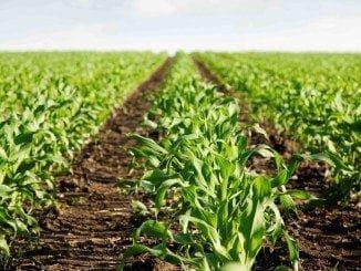 Hasta el 31 de agosto se pueden pedir subvenciones para modernizar las explotaciones agrarias
