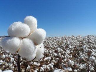 Los agricultores pidieron retrasar la siembra debido a la climatología adversa
