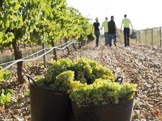 El MAGRAMA recoge una caída del 0,45% para el vino blanco, mientras que repuntan el 0,36% los tintos