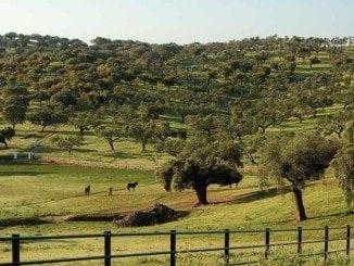 Actualmente hay censadas de oficio 14.050 fincas de dehesa que ocupan 2.199.607 hectáreas