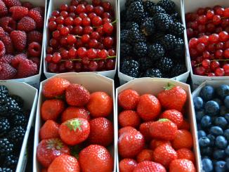 El congreso cuenta con 50 stands para empresas que interactúan con el sector de los frutos rojos