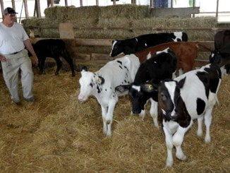 Los ganaderos tienen que afrontar retos como el de los bajos precios