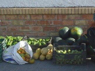 Las frutas y hortalizas recuperadas han sido devueltas al propietario de la finca