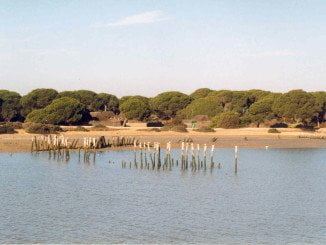 Piden un plan estratégico que paralice el deterioro de la zona de humedales de Doñana