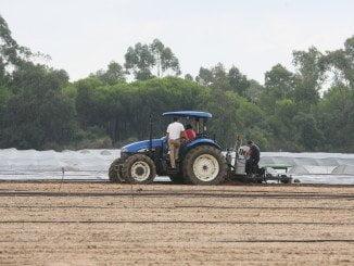 El fin de la campaña agrícola en Huelva ha incidido en la subida del paro en junio