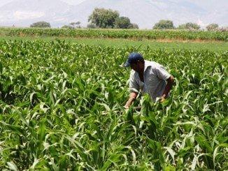En el encuentro se ha hecho un diagnóstico de la agricultura mediterránea y su industria asociada