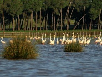 Hay una propuesta de ampliación de la protección de Doñana en 14.000 hectáreas