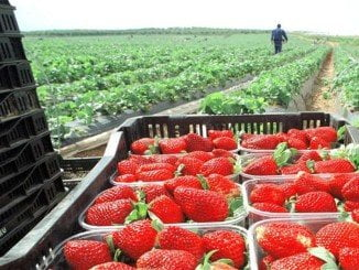 Moguer descatalogará 654 hectáreas para uso agrícola