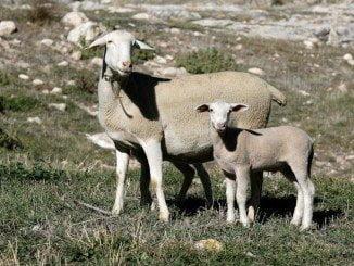 La Junta de Andalucía a abierto el plazo de solicitud de ayudas a la ganadería