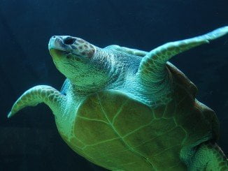 Parece que la tortuga llevaba varios días muerta