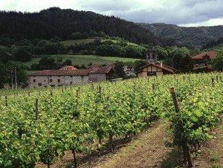 El Ministerio comunicó el pasado 1 de julio a las Comunidades Autónomas las superficies concedidas de viñedo