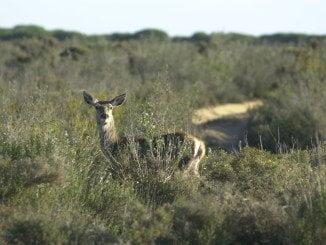 Un tercio de la superficie protegida de España se encuentra en territorio andaluz. En la imagen Doñana