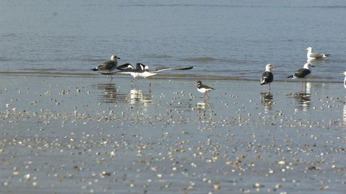 El problema del humedal de Doñana, incluido en las Marismas del Guadalquivir, parece estar asociado a usos agrícolas