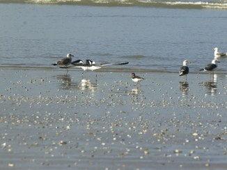 Los humedales de Doñana, en peligro según SEO/BirdLife