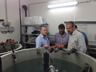 En lo que va de año, 1.250 ejemplares de peces procedentes de cultivo han sido reintroducidos en arroyos de las provincias de Cádiz y Almería