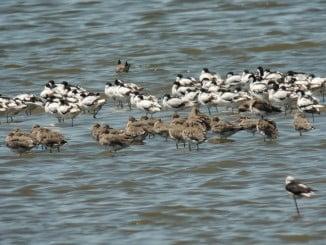 Marismas del Odiel es uno de los lugares preferidos y con más avistamientos de aves de Andalucía
