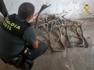 El detenido sustraía cráneos de animales y cuernas de venaos y ciervos