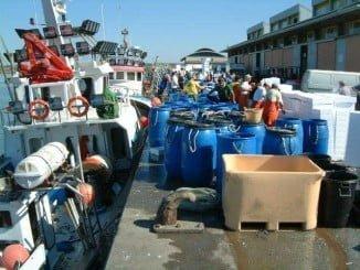 El PP pide al PSOE que adecente el Puerto Pesquero de Isla Cristina
