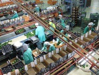 Andalucía, líder en exportaciones de frutas y legumbres, además de aceite de oliva y otros muchos productos