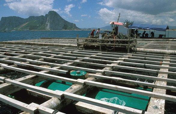 Se convocan diversas líneas de ayudas dirigidas a fomentar una acuicultura sostenible