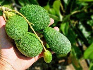 La agroalimentación y las bebidas, en primer puesto del ranking de exportaciones en el primer semestre del año