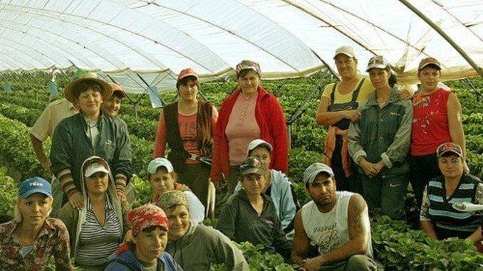 Inmigrantes en los campos de fresa de la provincia