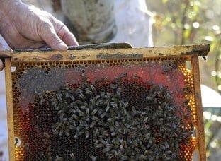 También se contemplan ayudas a la apicultura