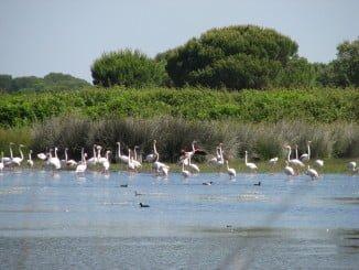Doñana es símbolo de referencia mundial de la protección y la conservación de la naturaleza