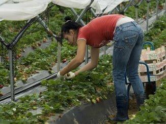 UGT-Huelva hará un seguimiento eficaz de las condiciones laborales de las inmigrantes temporeras