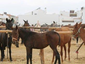 Palos y ganado en la Feria de Bollullos Par del Condado