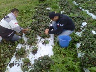 Los cultivos para el autoempleo centran la primera jornada de Agrocosta