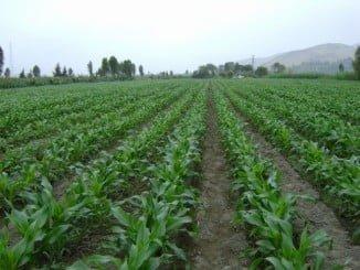 La PAC contempla ayudas para nutrir la reserva de crisis en el sector agrícola