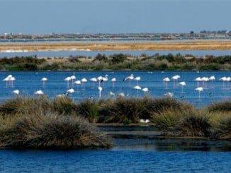 El entorno de Doñana albergará el polémico proyecto de Gas Natural