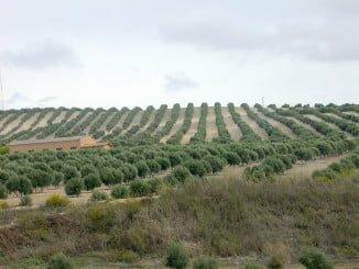 La producción  ha alcanzado esta campaña la cifra de 1.397.900 toneladas de aceite