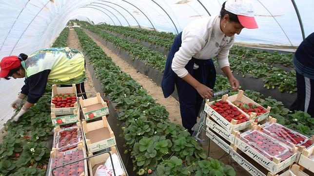 El 53,57% de los 1.891 empleos creados o afianzados en el medio rural onubense a través de los GDR ha tenido como beneficiarias a mujeres